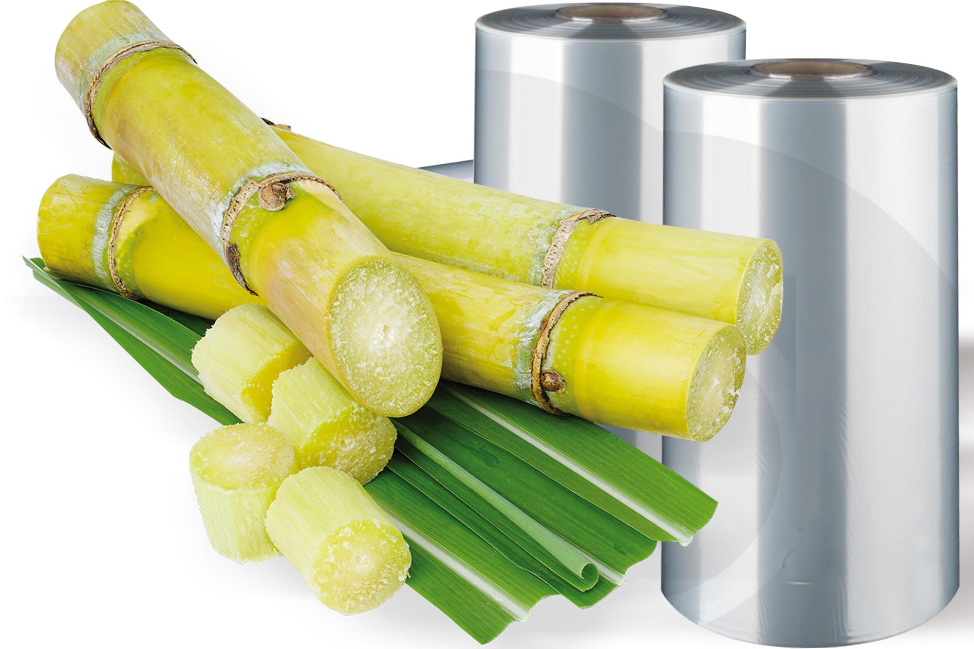 ekologiczna poliolefina wytwarzana z trzciny cukrowej